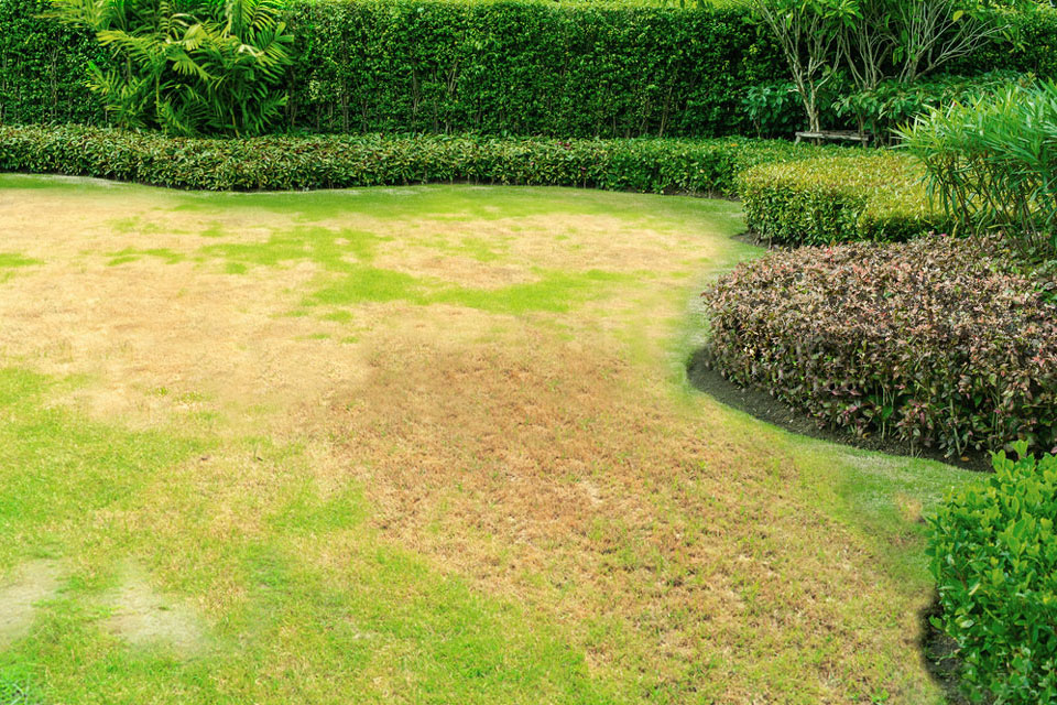 Lawn Before Water-Wise